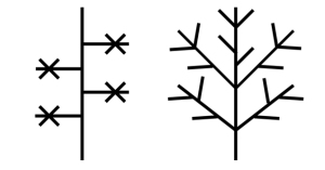 Branching Structure